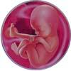 http://calcsoft.ru/img/pregnancy/19week.jpg