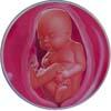 http://calcsoft.ru/img/pregnancy/27week.jpg