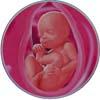http://calcsoft.ru/img/pregnancy/29week.jpg
