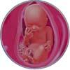 http://calcsoft.ru/img/pregnancy/30week.jpg