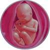 http://calcsoft.ru/img/pregnancy/32week.jpg