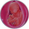 http://calcsoft.ru/img/pregnancy/33week.jpg