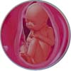 http://calcsoft.ru/img/pregnancy/34week.jpg