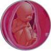 http://calcsoft.ru/img/pregnancy/35week.jpg