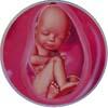 http://calcsoft.ru/img/pregnancy/36week.jpg