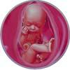 http://calcsoft.ru/img/pregnancy/37week.jpg
